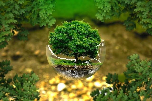 O que é e para que serve a Licença Ambiental?